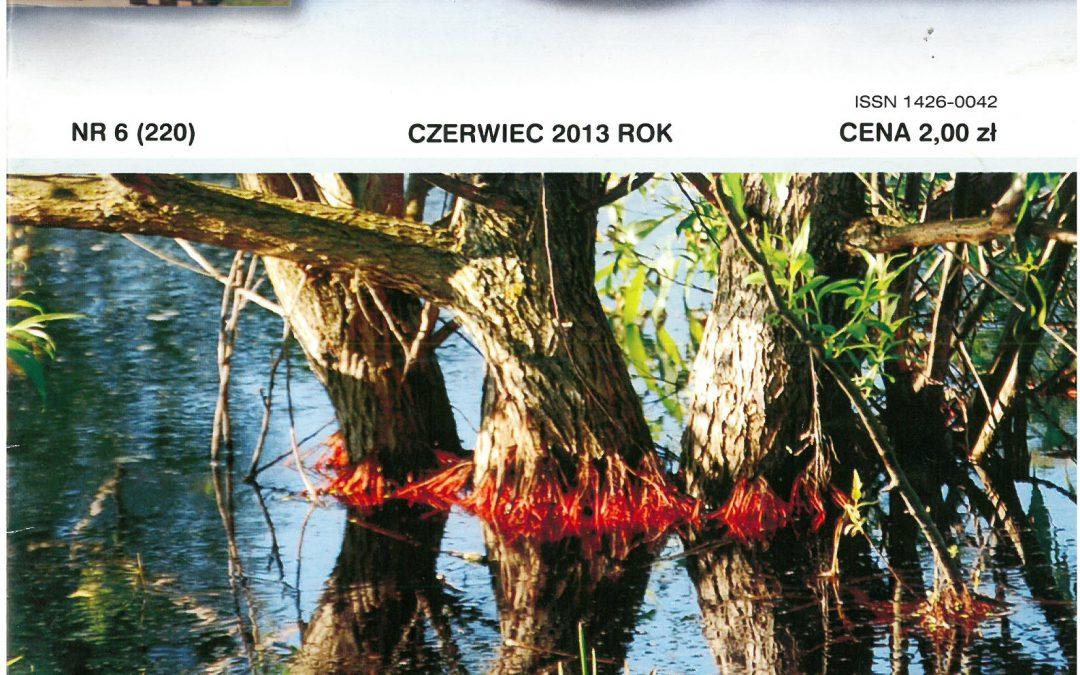 Echo Końskowoli nr 6/2013