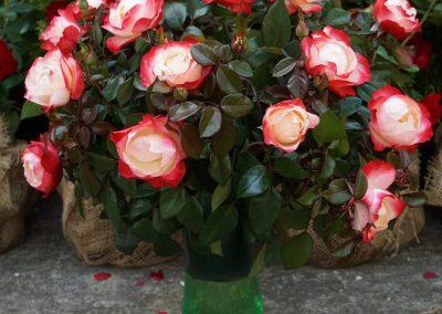 XXII Święto Róż